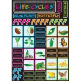Magnetic Mini Bulletin Board Set, Life Cycles