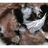 Feathers, Natural Colors