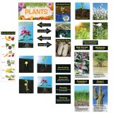 Plants Mini Bulletin Board Set