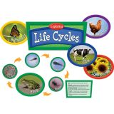 Exploring Life Cycles Bulletin Board Set