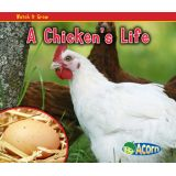 A Chicken's Life