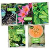 Plant Parts Book Set, Set of 5