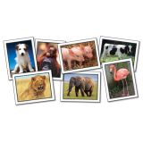 Photographic Learning Cards, Favorite Animals