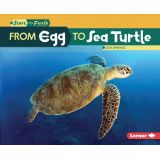 Start to Finish, From Egg to Sea Turtle