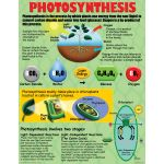 Cell Processes Teaching Poster Set
