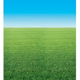 Fadeless® Design Roll, 48 x 50', Summer Horizon