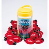 Ladybugs Counting Set
