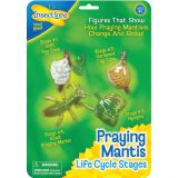 Life Cycle Stages, Praying Mantis