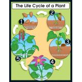 The Life Cycle of a Plant Chartlets