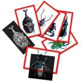 Insect X-rays and Picture Cards