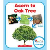 Acorn to Oak Tree