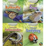 Animal Life Stories Series (Set of All 4 Books)