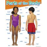Science Learning Charts - Parts of the body