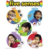 Science Learning Charts - Five senses