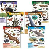 Exploring..Series Learning Charts Combo Pack