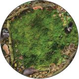 Forest Floor PhotoFun Rug™, 6' Round