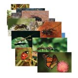 Insects Poster Set