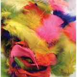 Feathers, Bright Hues