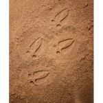 Let's Investigate Footprints, Woodland