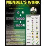DNA & Heredity Teaching Poster Set