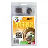 Explore with Me Fossils