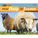 Start to Finish, From Sheep to Sweater
