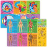 Smart Poly® Double-Sided Learning Mat, Human Body