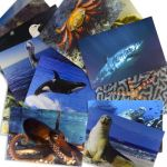 Mega Pack of Animals & Insects, Set of 48