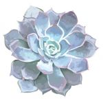 Schoolgirl Style™ Simply Stylish Black & White Succulents Colorful Cut-Outs® Assorted Designs
