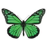 Schoolgirl Style™ Woodland Whimsy Butterflies Colorful Cut-Outs® Assorted Designs