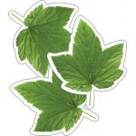 Schoolgirl Style™ Woodland Whimsy Green Leaf Cut-Outs