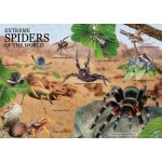 Wild Environmental Science: Extreme Spiders of the World Science Kit