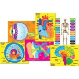 Human Body Foam Manipulatives, Human 6-Piece Set
