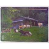 Cattle 25 Piece Jigsaw Puzzle