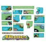 Birds Bulletin Board Set