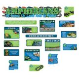 Amphibians Bulletin Board Set