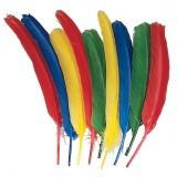 Quill Feathers, Pack of 24