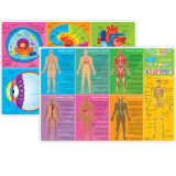HUMAN BODY LEARNING MAT 2 SIDED WRITE ON WIPE OFF