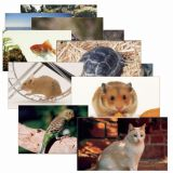 PETS 14 POSTER CARDS