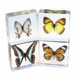 4 Piece Butterfly Collection