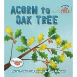 Acorn To Oak Tree-Follow The Life Cycle