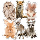 Colrful Animals Cutouts Assrt Designs