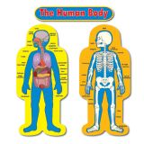 Child-Size Human Body Bulletin Board Set
