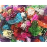 Speckled Colorful Feathers