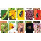 Creative Paper Collection - Nature's Beast