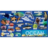 Ocean, Plants and Animals Bulletin Board Set