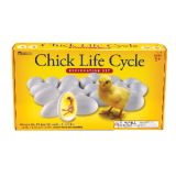 Chick Life Cycle Exploration Set