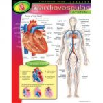 The Human Body Learning Chart Combo Pack