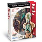 Anatomy Models, Human Body