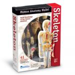 Anatomy Models, Skeleton
